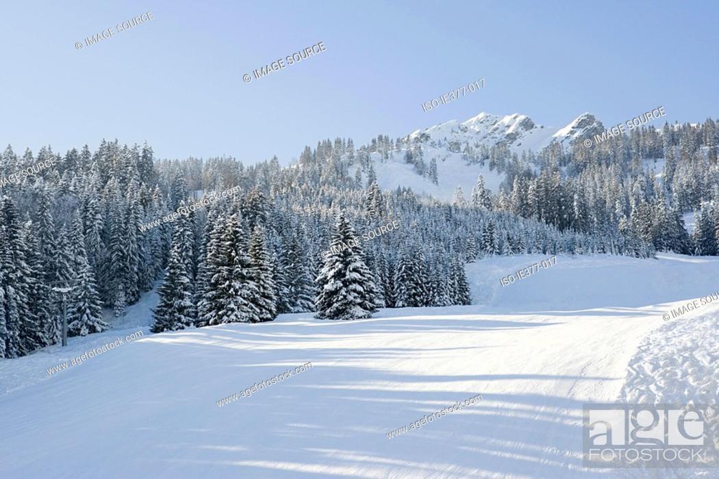 Stock Photo: A winter scene.
