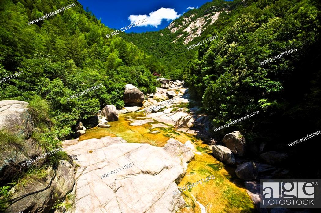 Stock Photo: Trees in a forest, Emerald Valley, Huangshan, Anhui Province, China.