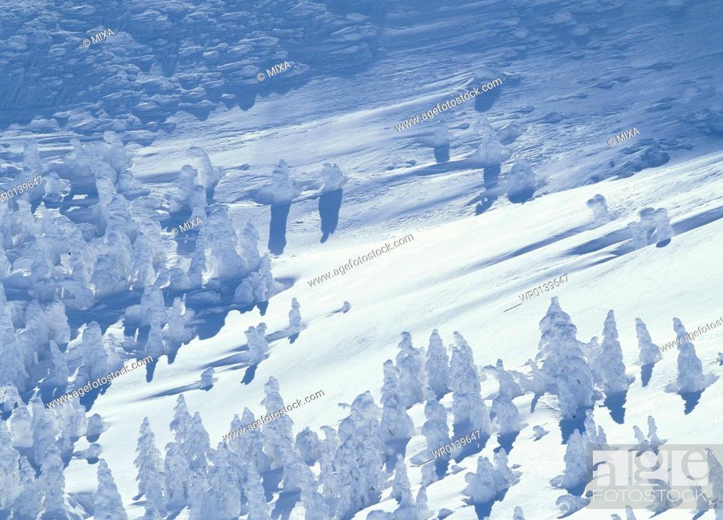 Stock Photo: Snow Monster, Yamagata, Yamagata, Japan.
