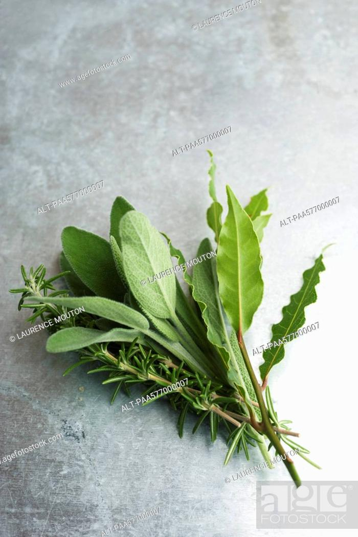 Stock Photo: Fresh sage, rosemary, and bay leaves.