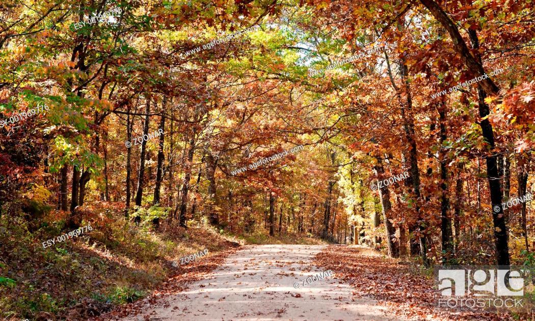 Stock Photo: country road through autumn trees.