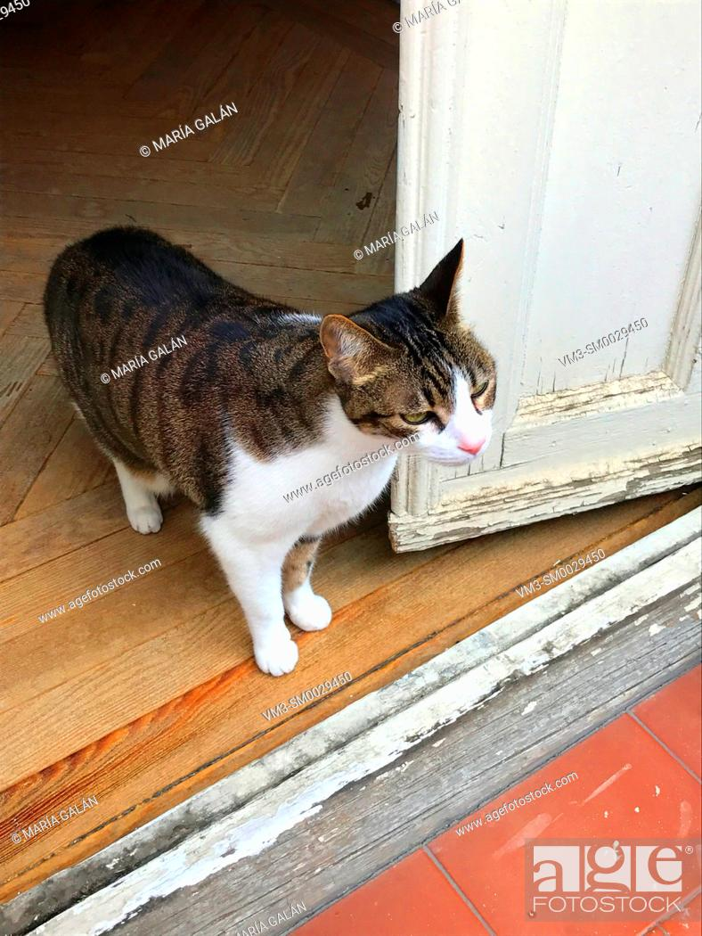 Stock Photo: Tabby and white cat by an open door.