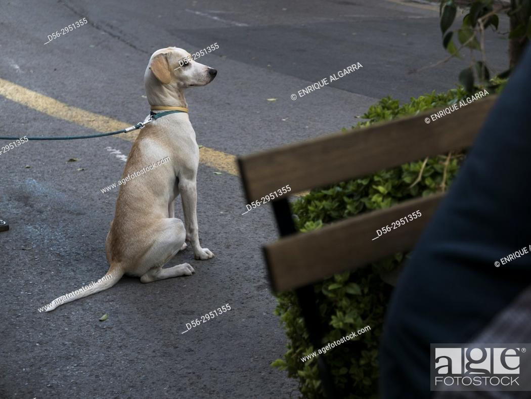 Stock Photo: dog waiting for his master, Valencia, Spain.
