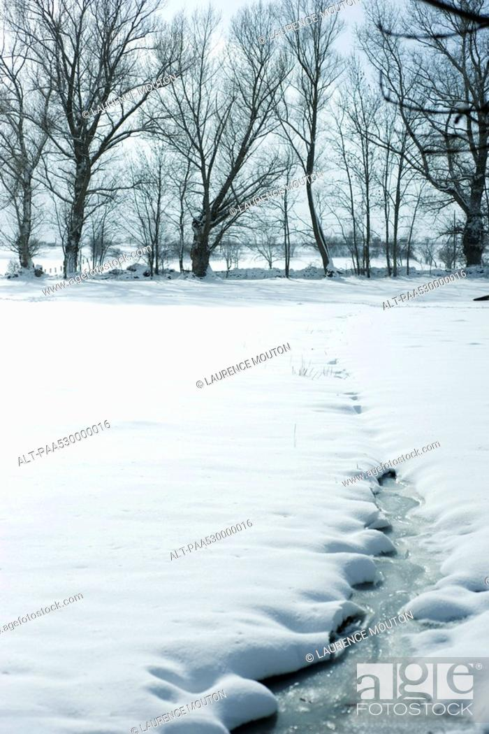 Stock Photo: Winter landscape, snowy field in foreground, line of trees in background.