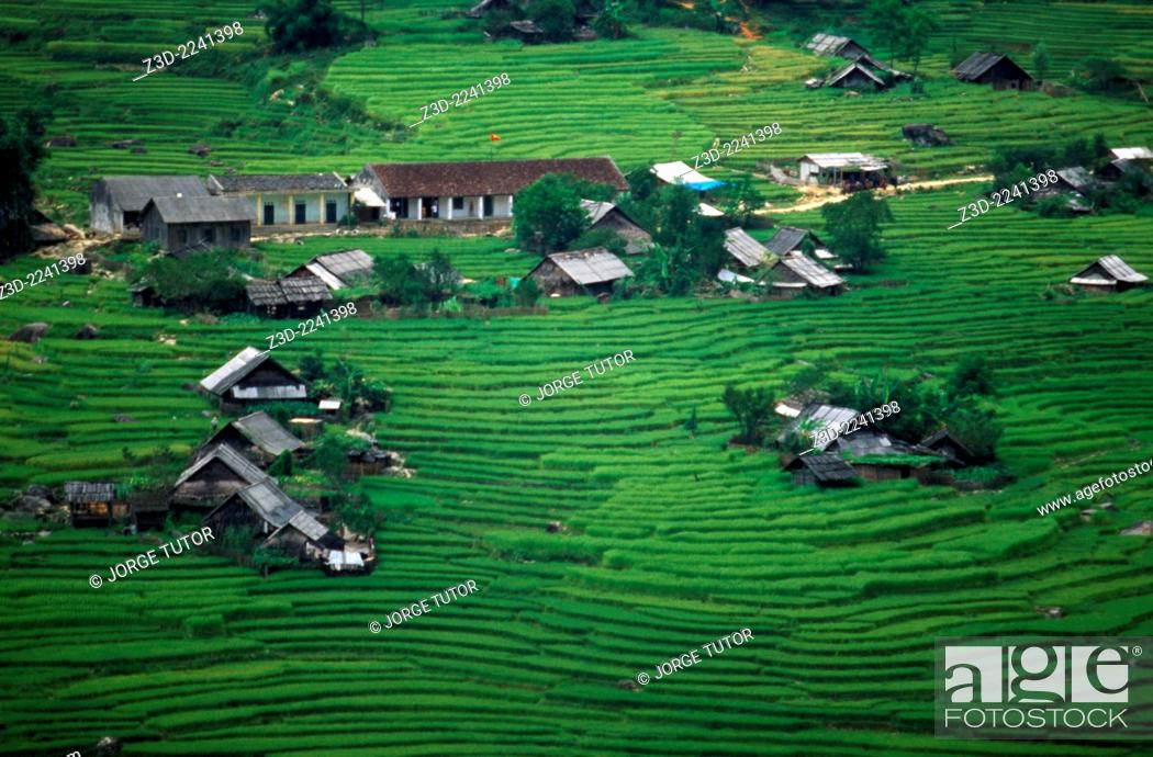 Stock Photo: Rice terraces near Ta Van, Sapa, Vietnam.