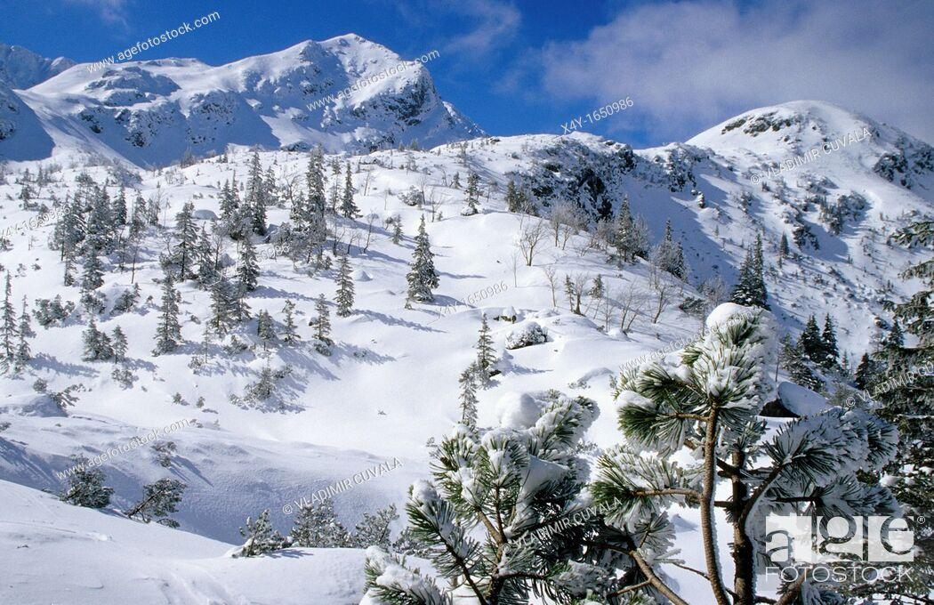 Stock Photo: Winter scenery at Rohacska dolina, Zapadne Tatry - Rohace.