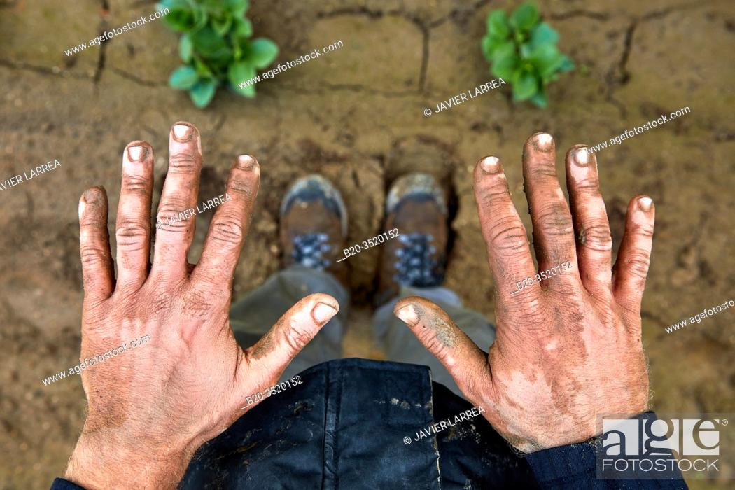 Stock Photo: Dirty hands of farmer, Agricultural field, Calahorra, La Rioja, Spain, Europe.