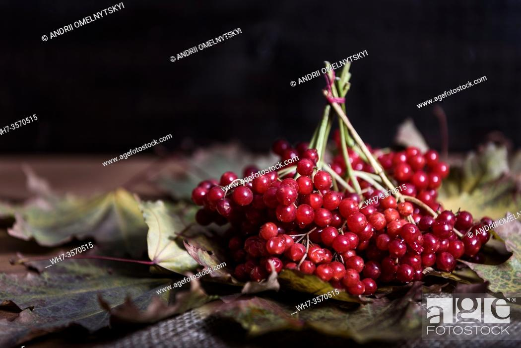 Imagen: red viburnum berries on a branch on the table with leaves.