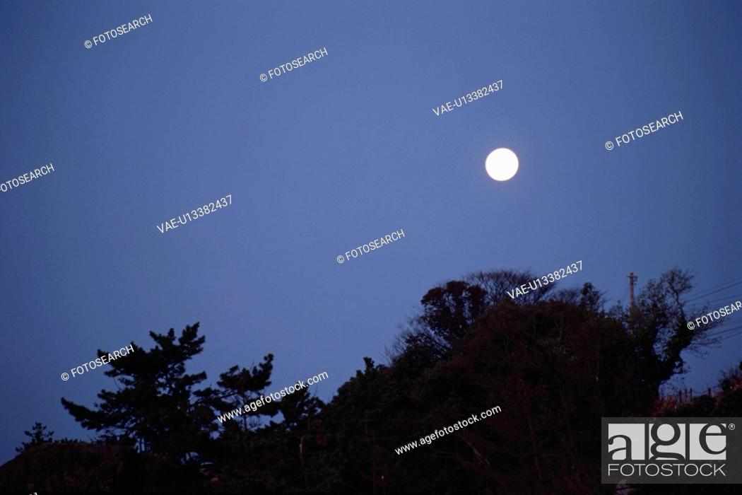 Stock Photo: A Full Moon And A Forest.