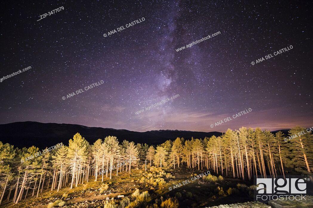 Stock Photo: Green Trees Woods In Park Under Night Starry Sky from balcony at Gredos state run hotel Avila Spain.