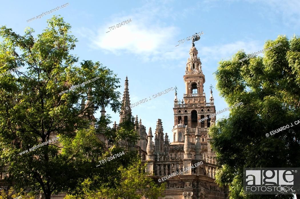 Stock Photo: Cathedral and Giralda. Seville.
