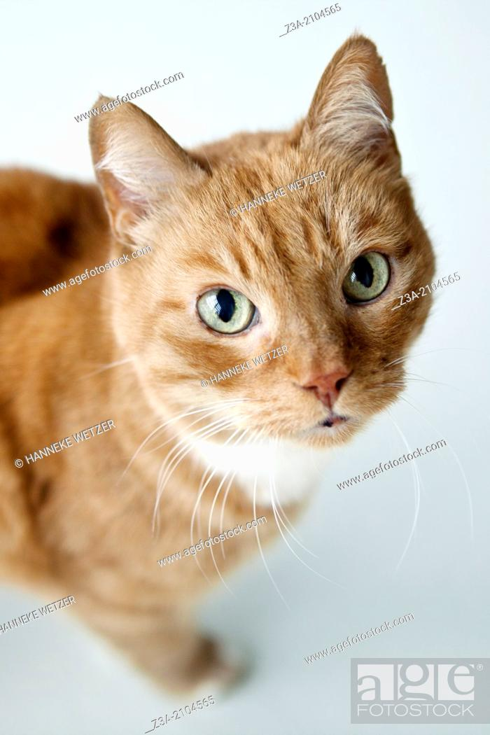 Photo de stock: Domestic Cat.
