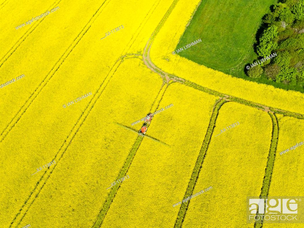 Stock Photo: Aerial Of Tractor Spraying Oilseed Rape Crop With Pesticide.