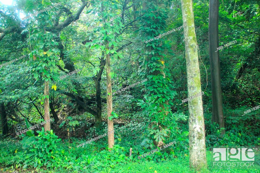 Stock Photo: Forest Botanical Garden Caracas.