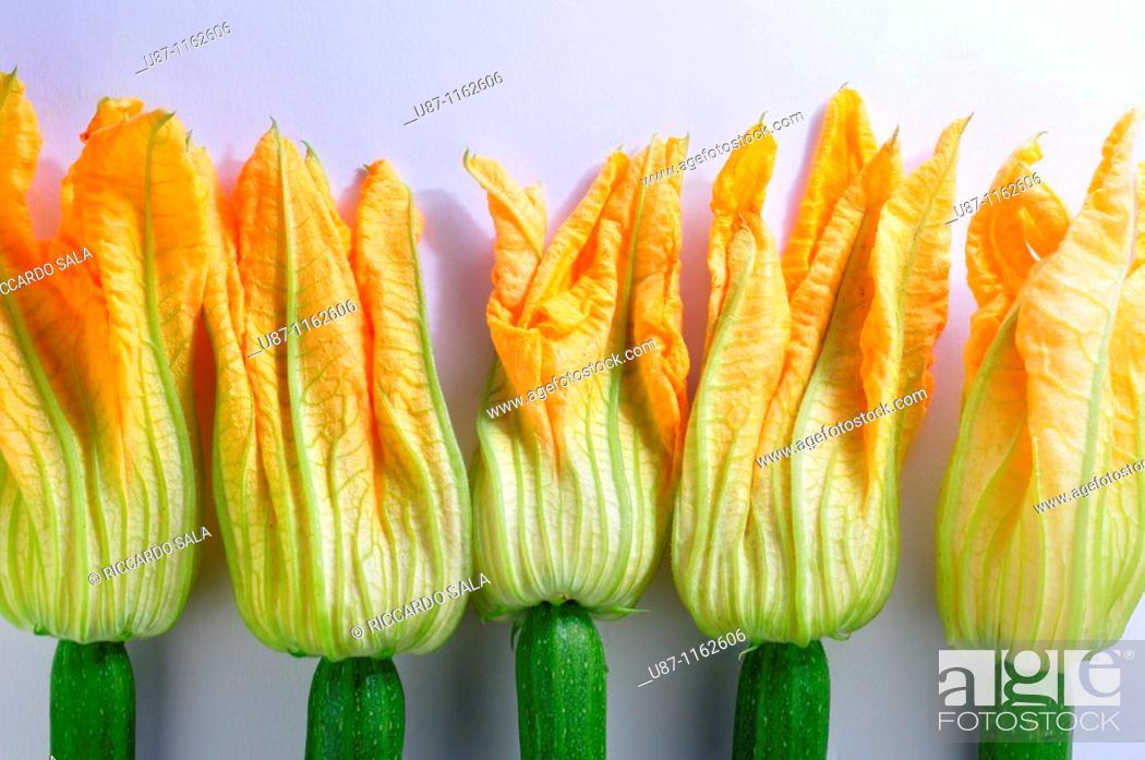 Stock Photo: Zucchini flowers, Courgette blooms, Pumpkin flower.