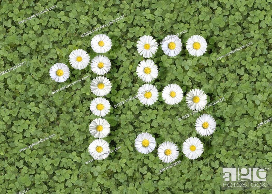 Shamrocks, blooms, order, number, 15, M series, flowers, knows