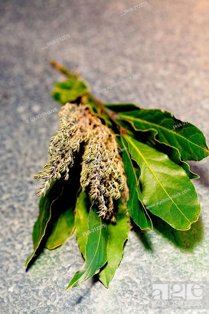 Stock Photo: Bay leaves Laurus nobilis and thyme.