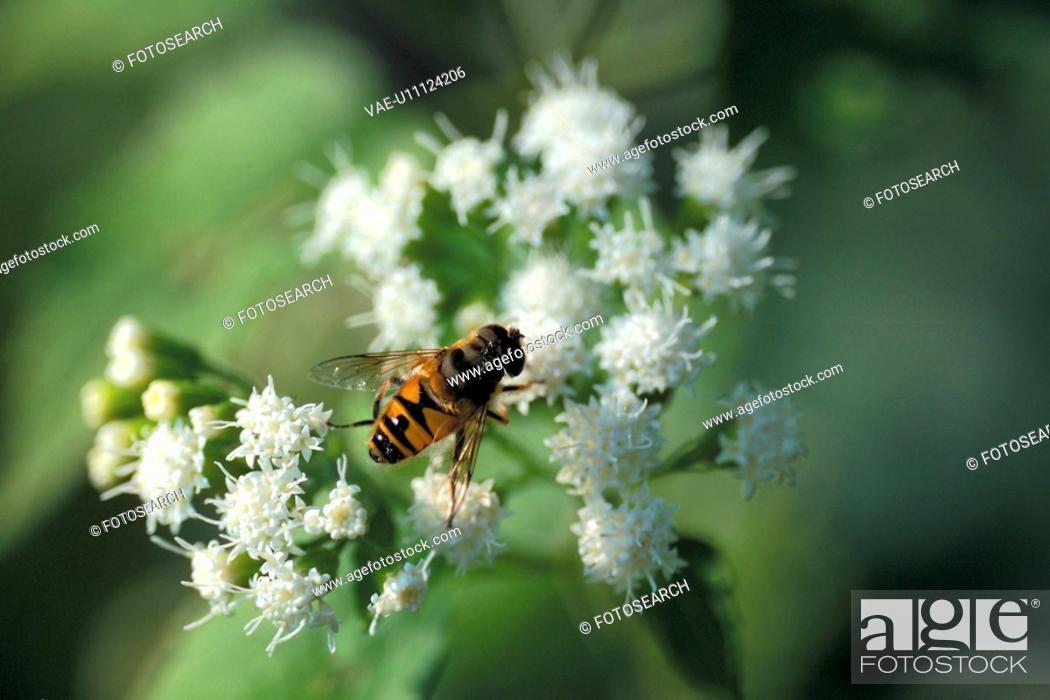 Stock Photo: bloom, plant, flowers, flower, plants, bee.