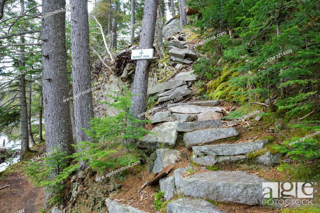 Stock Photo: Idlewild along the Saco Lake Trail in Crawford Notch State Park of New Hampshire USA.