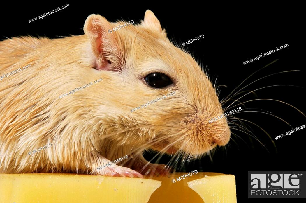 Stock Photo: mouse with cheese.