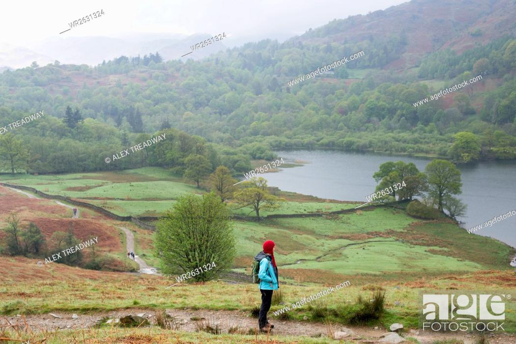 Stock Photo: A woman looks out over Rydal Water near Grasmere, Lake District National Park, Cumbria, England, United Kingdom, Europe.