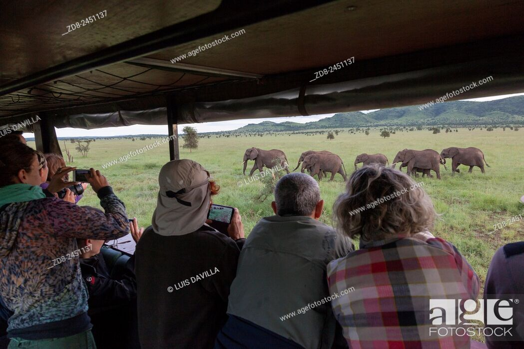 Imagen: elephants and tourism in serengeti national park.