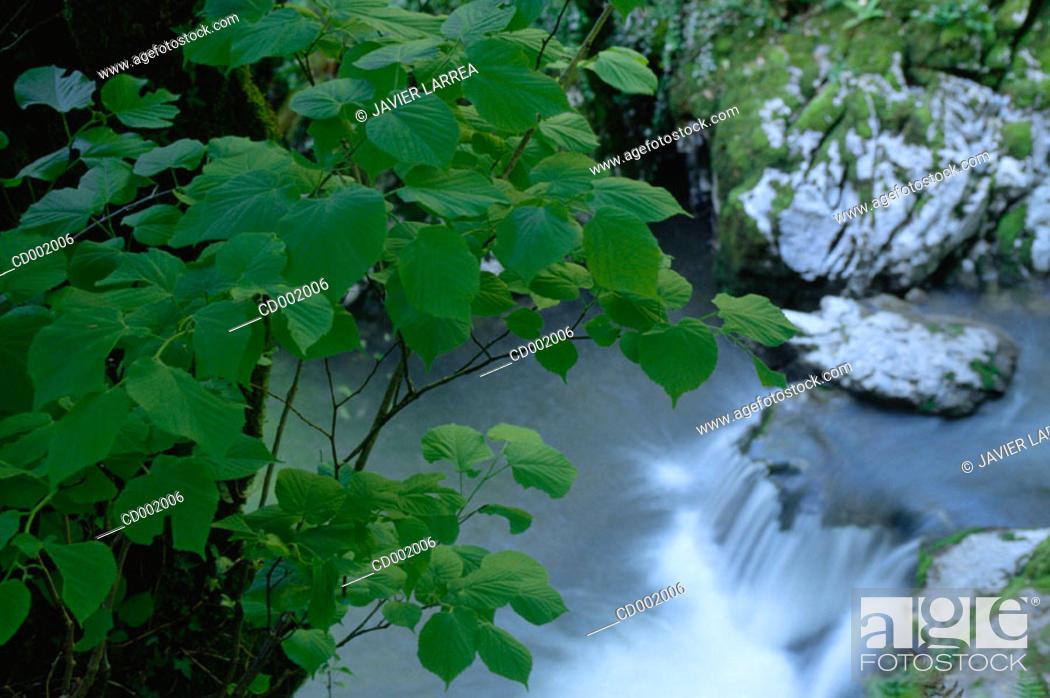 Stock Photo: Deva River. Aranzazu. Guipúzcoa. Spain.