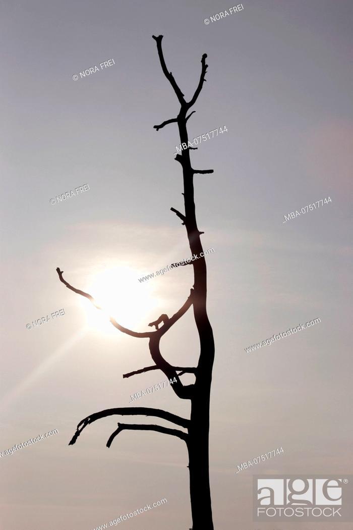 Stock Photo: Dead tree, silhouette, sun, sky.