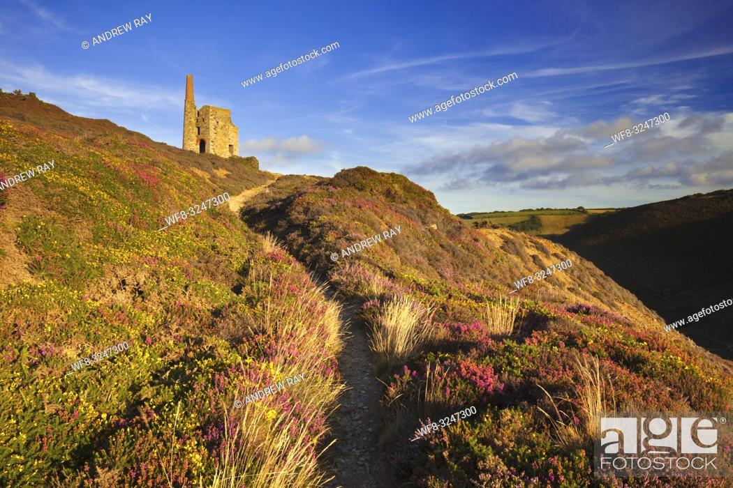 Imagen: A footpath leading to Tywarnhayle Engine House near Porthtowan in Cornwall. The image was captured on an evening in late August when the heather and gorse was.