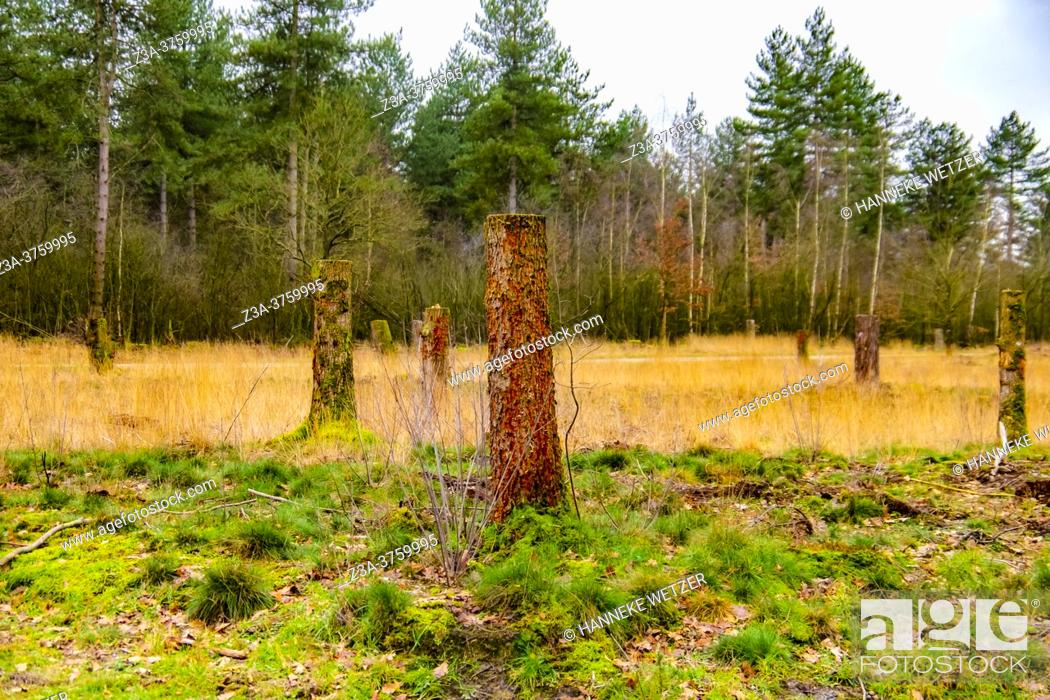 Stock Photo: Chopped wood in the forest, The Netherlands, Europe.