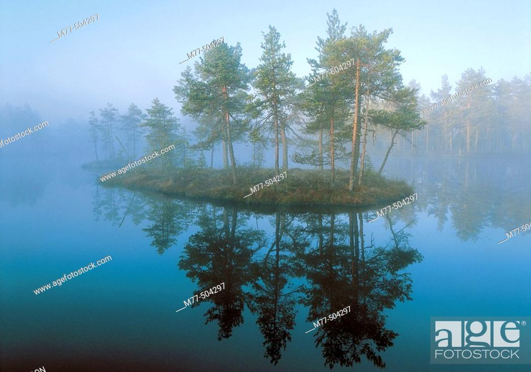 Stock Photo: Lake, mist, fog, summer morning, pine forets, island, water. Knuthöjdsmossen. Västmanland. Sweden.