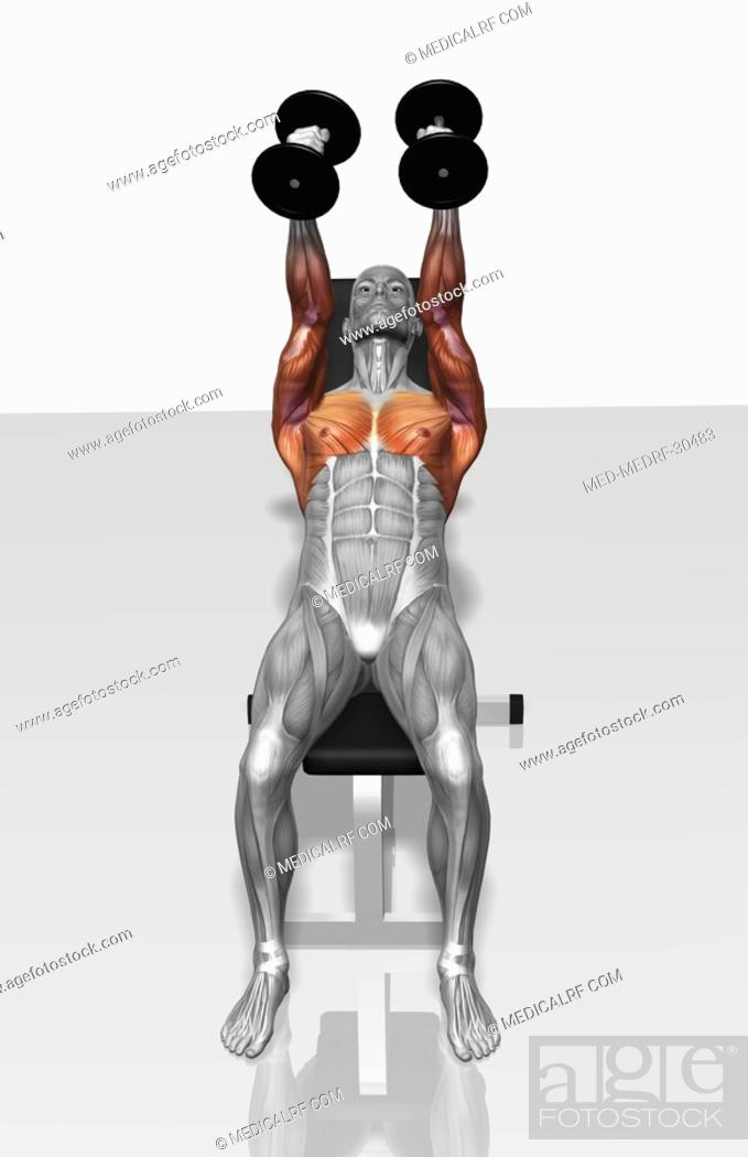 Stock Photo: Dumbbell incline fly exercises Part 1 of 2.