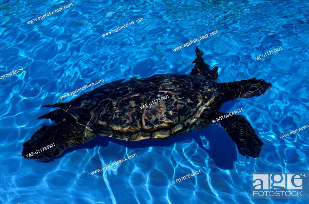 Stock Photo: Sea Turtle.