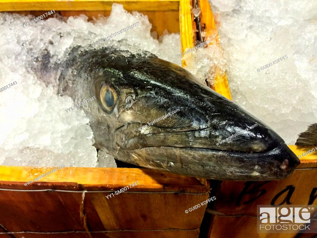 New York City  Fresh fish offered for wholesale at the New