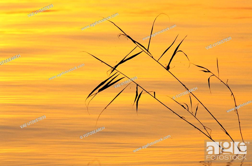 Stock Photo: landscape, calf, lake, gold, calm, morning sun, austria.