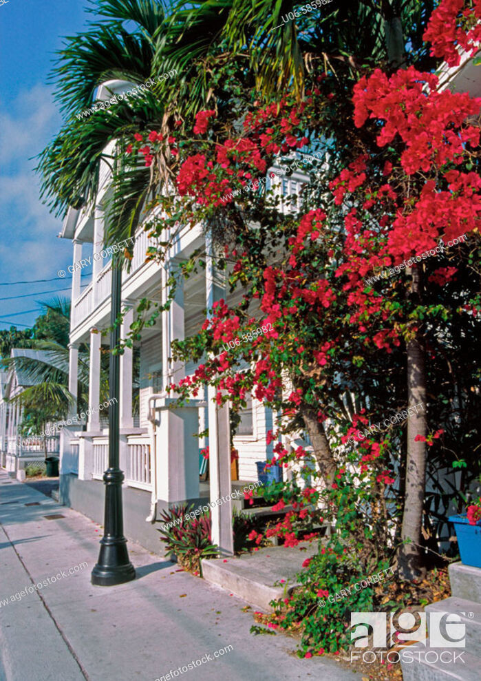 Stock Photo: flowers on street in key west.