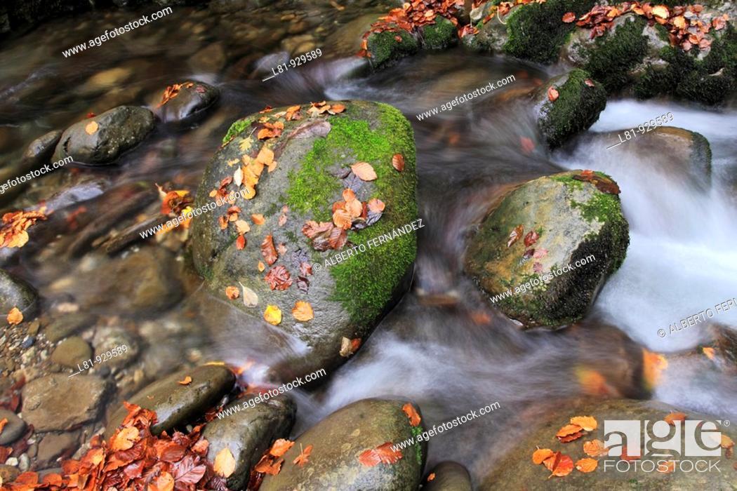 Stock Photo: Lindes river in autumn. Quirós. Asturias. Spain.