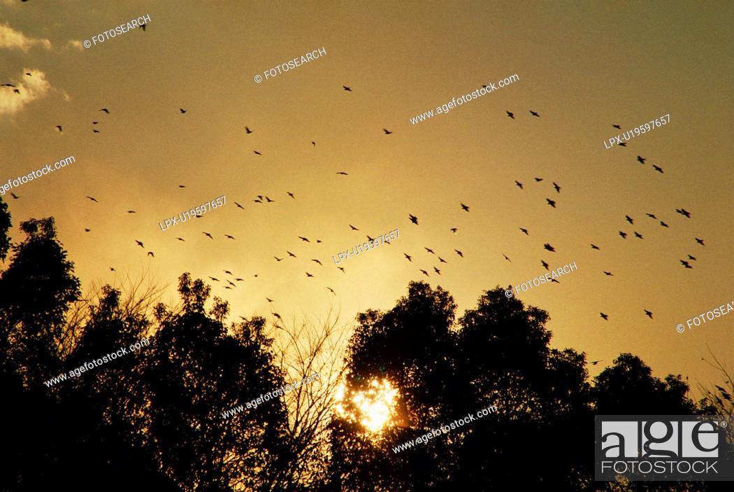 Stock Photo: Flock of birds in sunset.