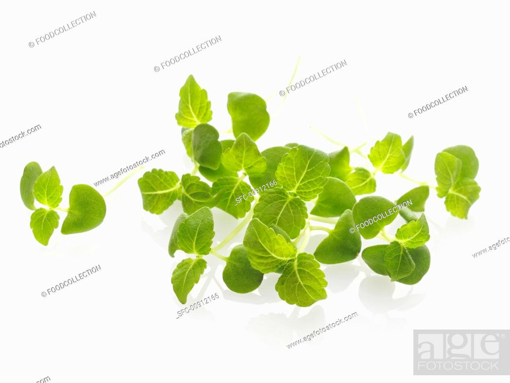 Stock Photo: Shiso sprouts.