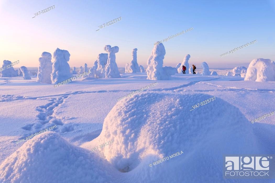 Imagen: Hikers in the snowy forest, Riisitunturi National Park, Posio, Lapland, Finland.