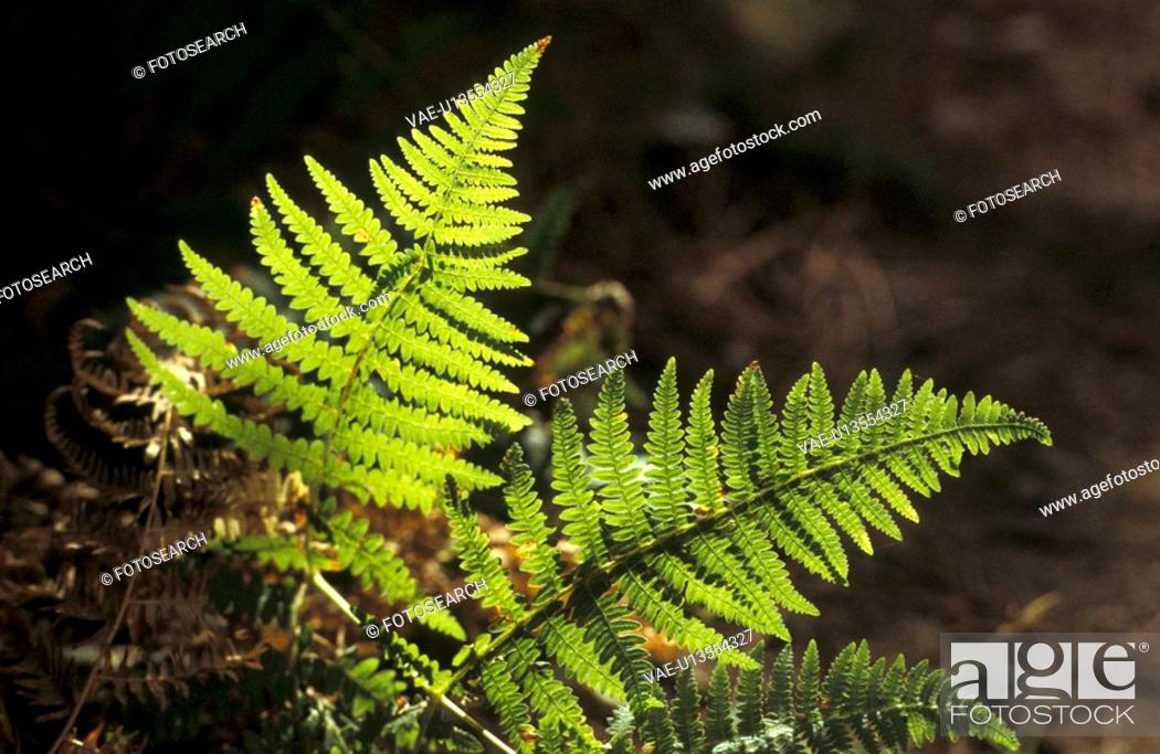 Stock Photo: fern, blauphoton, far, day, cellar, alexander.