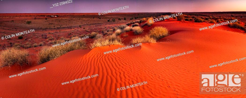Imagen: Tracks across sand dune at dusk, panorama, Old Andado Station, Simpson desert, Northern Territory, Central Australia.