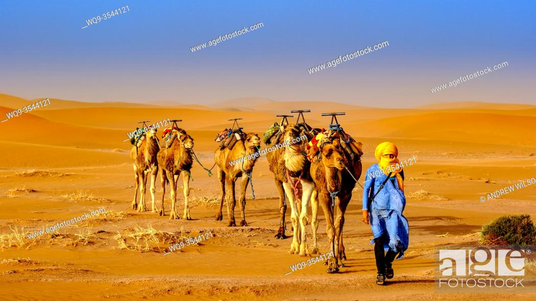 Stock Photo: A man leading a camel train across the Moroccan Sahara Desert near Chegagga.