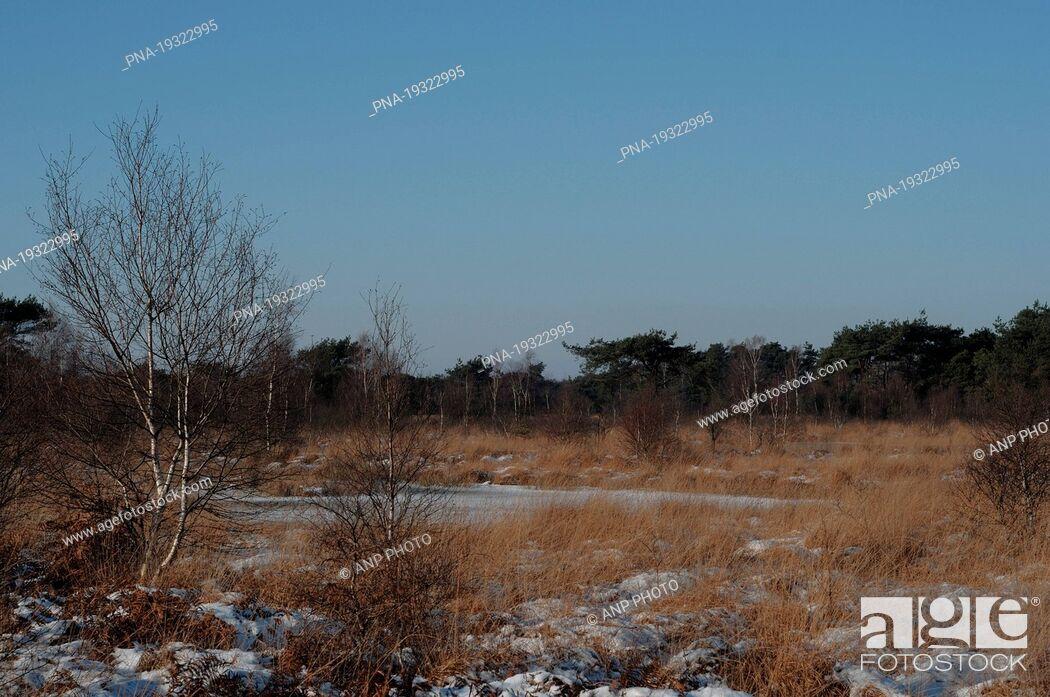 Imagen: National Park de Groote Peel, De Peel, Limburg, North Brabant, The Netherlands, Holland, Europe.