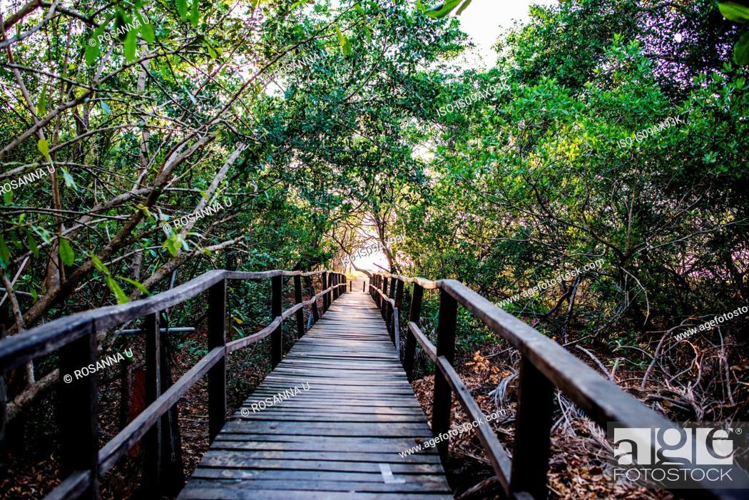 Stock Photo: Rainforest footbridge to Tamarindo beach, Guanacaste, Costa Rica.