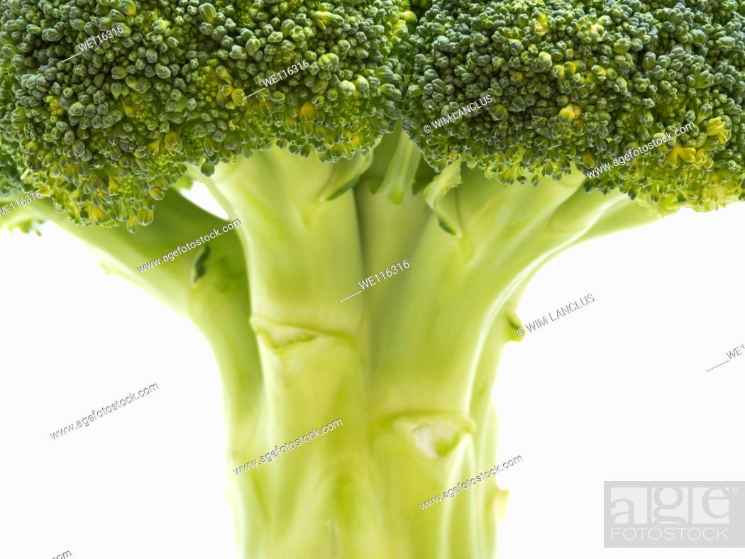 Stock Photo: Broccoli closeup isolated on white background.