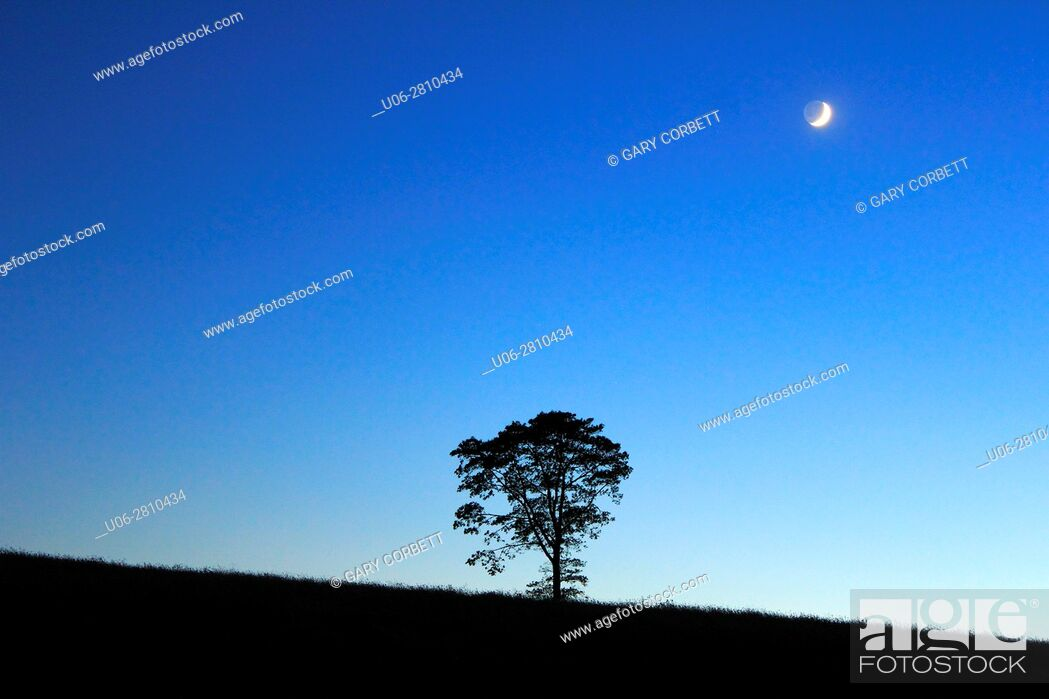 Stock Photo: Twilight with a tree in a field and the moon above.