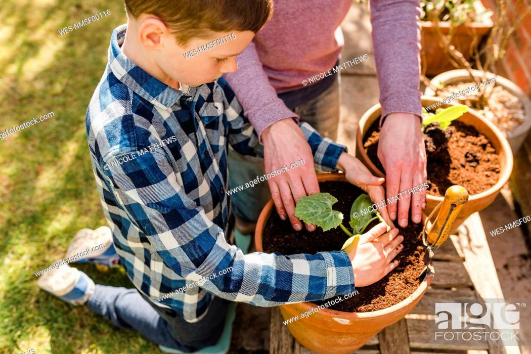 Photo de stock: Father and son planting seedling together.