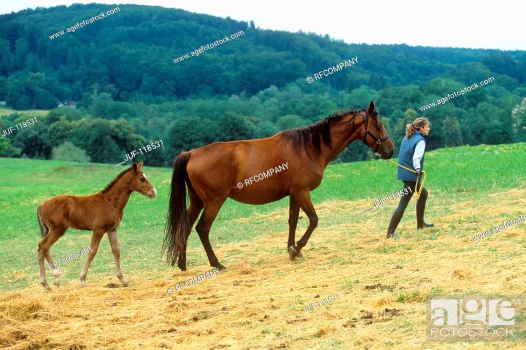 Stock Photo: Sarvarer and foal with woman.