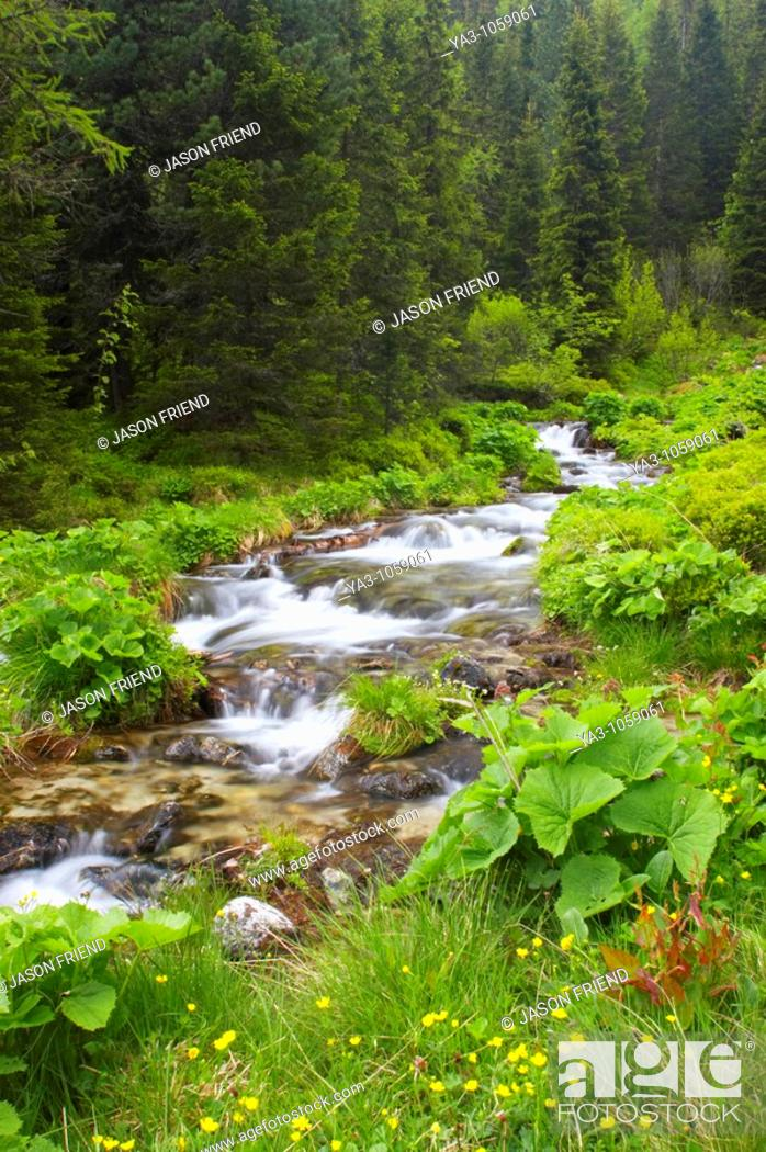 Stock Photo: Switzerland Valais Val d Arpette A small stream flowing through woodland in the Val d arpette running to the Lac de Champex.
